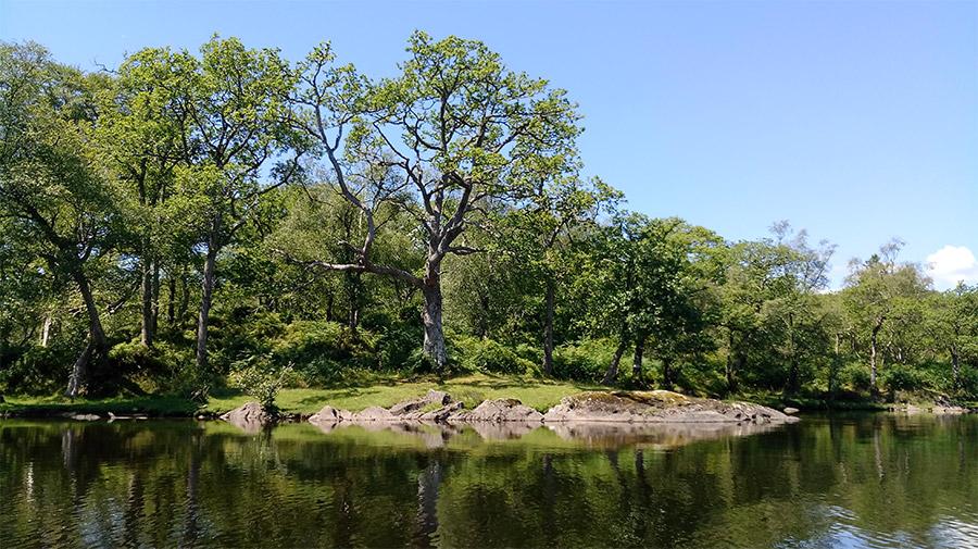 Une des nombreuses îles présentes sur le Loch Lomond