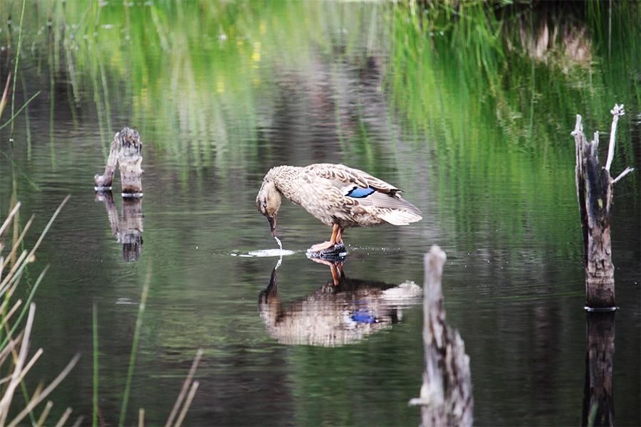Arrêt pour observer la faune au bord du lac